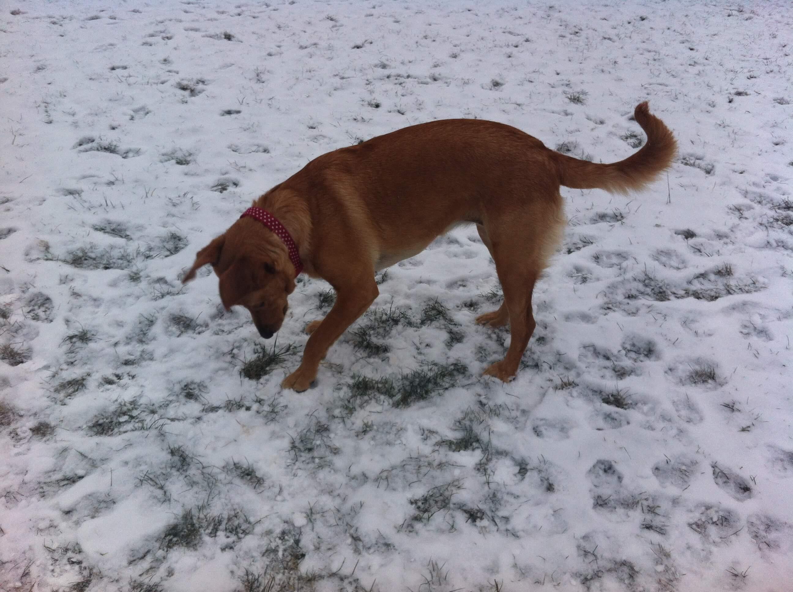 lara-prvy-sneh
